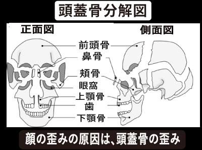 ほほ骨の出っ張りと頭蓋骨の分解図.png